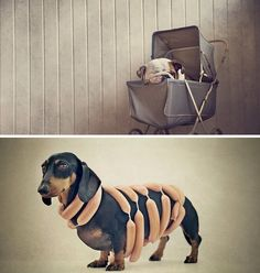 Pet Photography by Serena Hodson