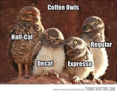 december, coffe owl, cups, espresso, the eagles, coffee, crosses, drinks, owls