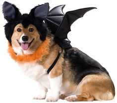 Bat Dog Costume - Dog Halloween Costumes from EntirelyPets