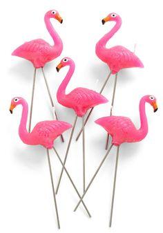 TGI... Flamingos?