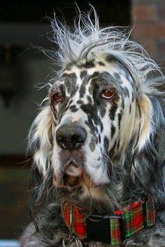 Dog shots.....bad hair day....