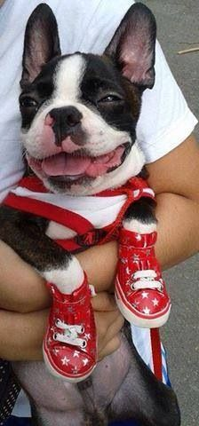 Do you like my new sneakers?