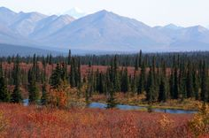 Beautiful pictures along the Parks Highway. Alaska.