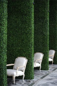 lovely white chairs and tall hedges