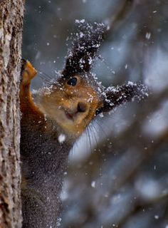 Who says squirrels don't have big ears?  Snowy  by Bjorn Leirvik