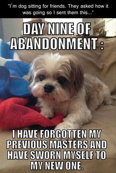 Funny Pictures Of The Day – 93 Pics funny animals, dog sit, puppies, friends, funny pics, funny pictures, funni, baby dogs, dogsit