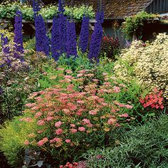Cottage gardens may appear wild and romantic, but it takes the right combination of colors, textures, and accessories to pull off the look.In this garden: Lavender blue scabiosa and red Astrantia; rosy Pimpinella and Alstroemeria; lacy white Eupatorium rugosom 'Chocolate' and creamy Clematis recta; and deep purple delphiniums. This is one beautiful garden...love it!!