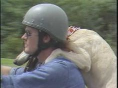 It scares me, but Dog seems pretty happy.  ---  Carolina Camera: The Original Motorcycle Dog