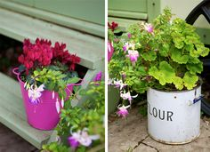 love the flour container for this plant
