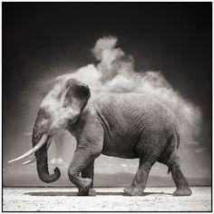 Nick Brandt, Elephant with Exploding Dust, Amboseli