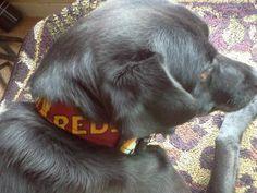Redskins Dog Collar