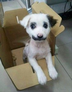 puppy with mustache