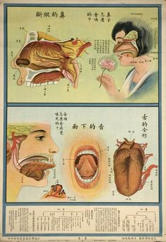 "1933: Chinese ""Understanding the human body"" Public Health Posters"