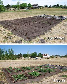Maintain A Vegetable Garden