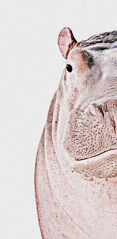 Half of Hippo