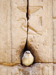 Little bird at the Temple of Horus in Egypt. How symbolic!!