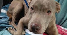 THIS IS GRAPHIC! THIS DOG WAS SEXUALLY ABUSED! Laura: Physically and sexually abused
