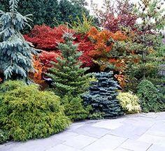 mixed evergreens