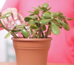 If your plants look like they need a boost, try using flat club soda to water them.