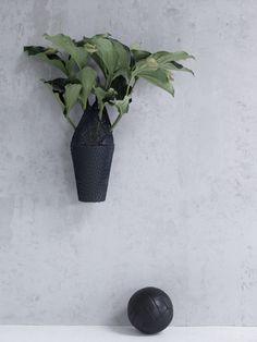Zimmerpflanzen  Produktion Maria Grossmann