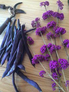 Purple home #harvest #garden