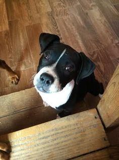 super cute Dudley