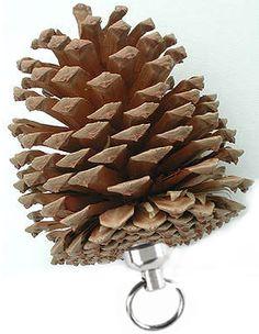 Pine Cone Geocache
