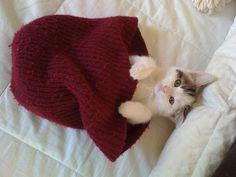 {kitten in a hat} now that is cozy