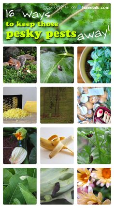 Keep those bugs out of your garden! Here are 16 great tips!
