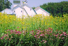 Rural Iowa Beauty