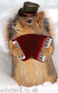 accordian squirrel