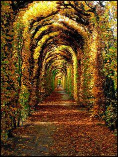 Fall colors in the garden of Schönbrunn Palace in Vienna, Austria. #austria #vienna #autumn #schoenbrunn #palace #walk #sun
