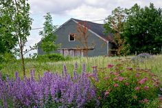 rural living-- dreamy!