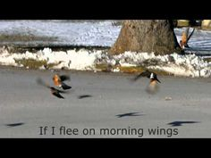 """If I Flee on Morning Wings"", Fernando Ortega"