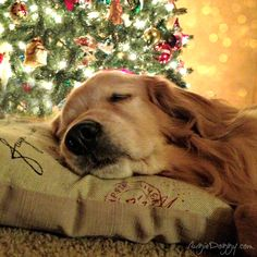 Golden Christmas Dreams