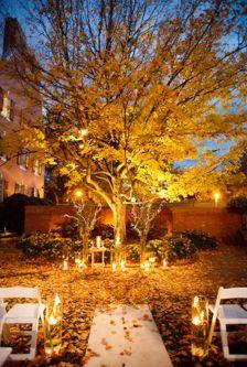 Lighting & leaves
