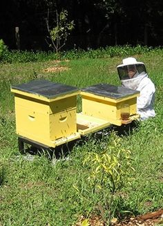 Beekeeping for beginners! Great introductory video and blog post on whether or not to become a beekeeper!