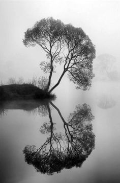 """""""One can not reflect in streaming water. Only those who know internal peace can give it to others.""""    Lao Tzu"""