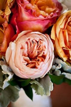 english roses, color, garden, flower, floral, peoni