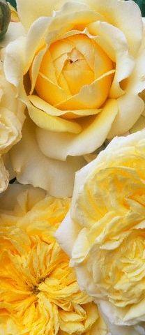 yellow flowers #FlowerShop