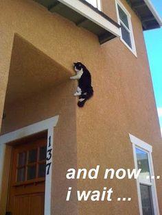 cats, sneaki, cat and dog memes, funni, ninja cat video, funny ninjas, tons of funny stuff, kitty, ninja animals