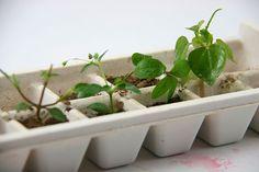 Alternative Ways to Use an Ice-Cube Tray
