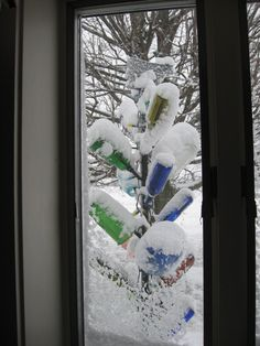 Our bottle tree adds color to the yard even in the winter.
