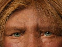 Neanderthal-human sex bred light skins and infertility - life - 29 January 2014 - New Scientist