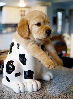 puppy in a cookie jar.