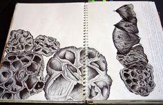 Art Ideas Natural Forms On Pinterest 93 Pins