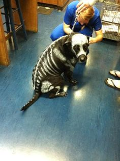 Found Roxy's costume for Halloween.  Just need some white paint.