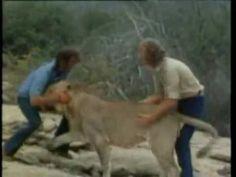 christian the lion video.  http://www.youtube.com/watch?v=4KIZ0E8RKoE