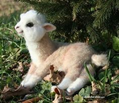 Baby llamas look like stuffed animals!