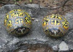turtles - painted rocks